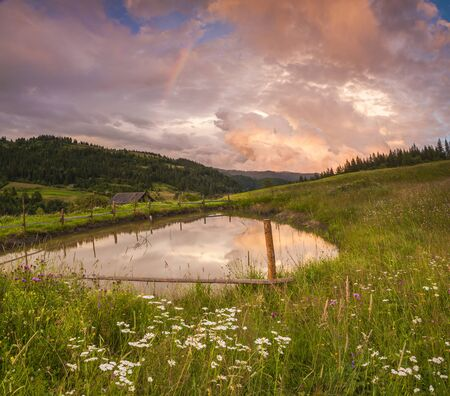 flowery: Flowery meadow in the mountains on the background of cloudy sky and rainbow.