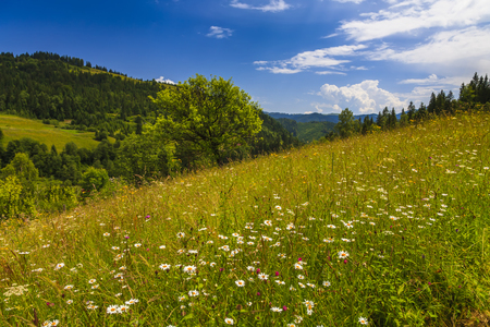 wasatch: Beautiful landscape with flowering meadow, trees and hills. Stock Photo
