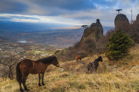 annexed: Wild horses grazing in the Crimean mountains.