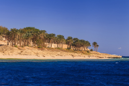 sharm: Sandy beach with palm trees. Egypt. Sharm El Sheikh.