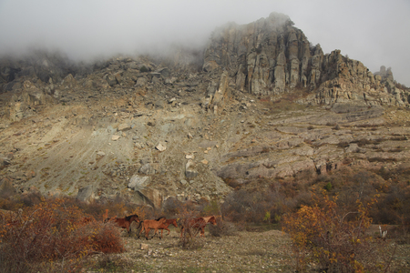 Wild horses grazing in the Crimean mountains. photo