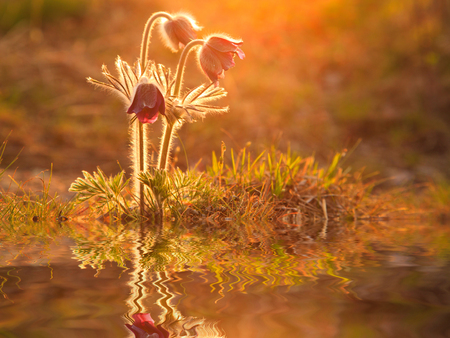 Reflection of beautiful spring flowers and green grass. photo