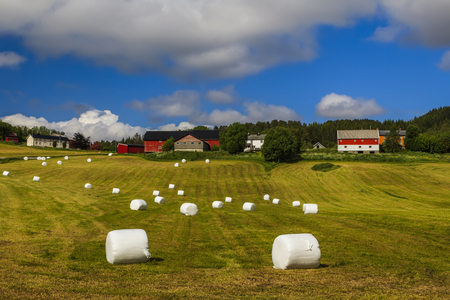 scandinavian landscape: Haying in the field. Picturesque rural landscape. Norway.
