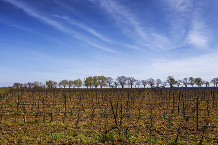 winepress: View of the grape lands in the south of France. Stock Photo