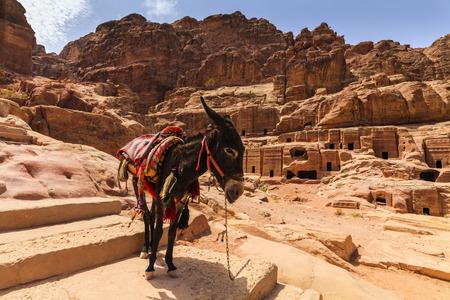 petra  jordan: Bedouins donkey at ancient Petra. Jordan
