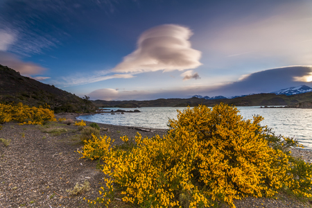 torres del paine: Beautiful flowers on the shore of a mountain lake. National Park Torres del Paine, Chile. Stock Photo