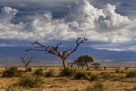 Beautiful African landscape in the background of the cloudy sky. Kenya. Africa.