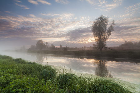small river: Mysterious misty dawn at the small river.