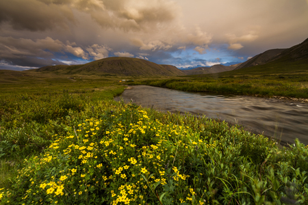 Field with wild flowers, river and mountains on the background.