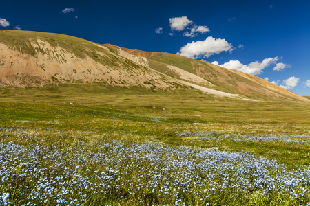 Field with wild flowers and mountains on the background. Blooming daisies, forget-me-not, and wildflowers