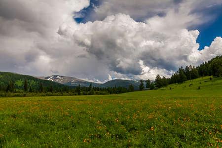 flowering field: Beautiful mountain landscape with flowering field. Orange Globeflowers.