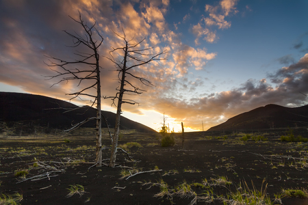 Dead trees on a sunset sky background. Dead forest. Kamchatka. Stock Photo