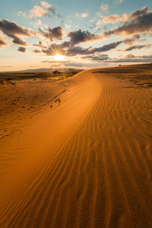 Picturesque desert landscape in the rays of sunset