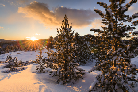 sunrises: Winter forest at sunset in the mountains Stock Photo