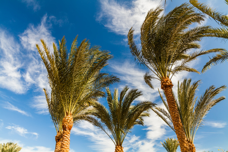 footage: High palm trees against a blue sky Stock Photo