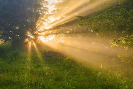 Sunny dawn in a foggy forest in spring