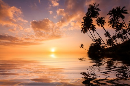 Reflection of palms at sunset on a tropical island.