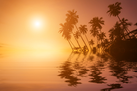 daybreak: Sunset on the beach with coconut palms. Stock Photo