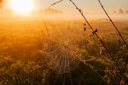 日の出の光に露とクモの巣