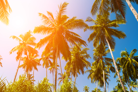 High palm trees against a blue sky Stock Photo