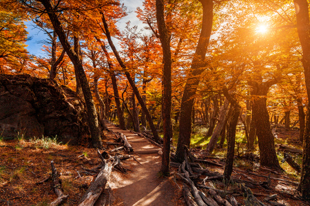 Path in the autumn forest. Patagonia, Argentina Stock Photo