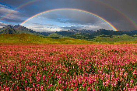 Double rainbow over blooming mountain valley