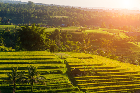 Rice terraces in mountains at sunrise, Bali Indonesia Stock Photo