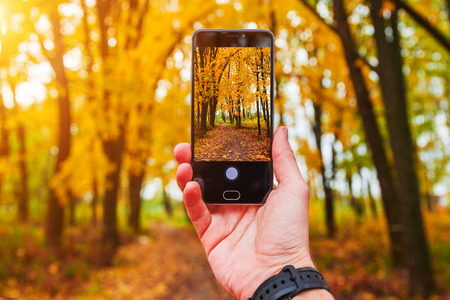 Man taking picture of yellow poplar in autumn with phone