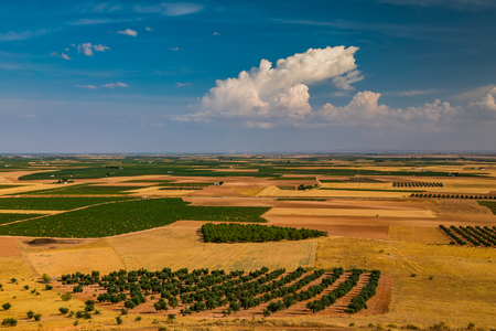 Vineyards on a bright sunny day in Spain