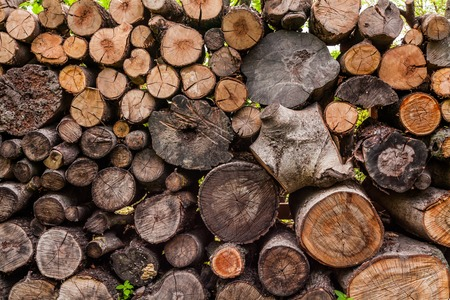 A woodpile of round logs and wood chucks in the countryside
