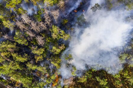 Aerial view of wildfire in forest. Burning forest and huge clouds of smoke. 스톡 콘텐츠