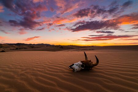 Skull bull in the sand desert at sunset. The concept of death and end of life Imagens