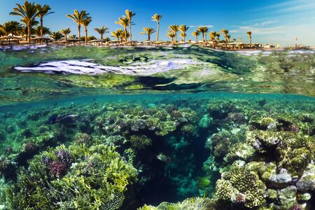 Wonderful and beautiful underwater world with corals and tropical fish and palm trees. Red sea, Egypt