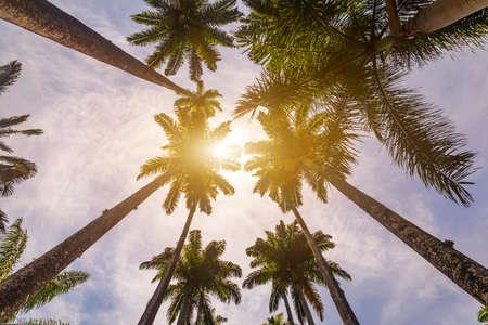 Avenue of royal palm trees at the Jardim Botanico botanic gardens. Rio de Janeiro, Brazil