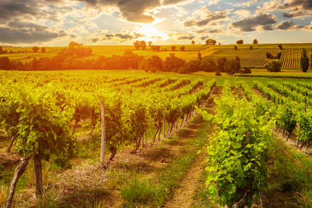 Vineyards at sunset with beautiful light. Gascony, France Stock Photo