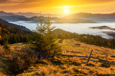 Misty dawn in the mountains. Beautiful landscape.