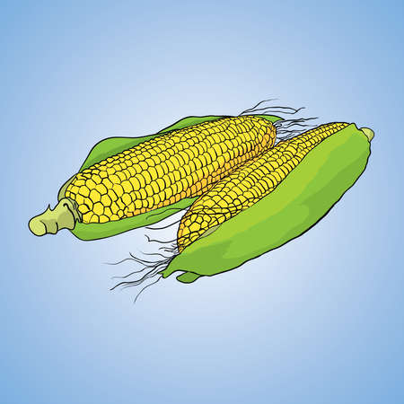 Vegetable Icon Object with two yellow corns in the centre on blue background vector illustration