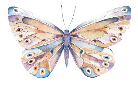 segmented bodies: watercolor painting of a brown and purple fantasy butterfly Stock Photo