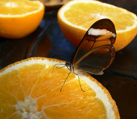 Butterfly sipping orange juice