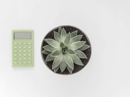 Succulent, calculator on a white background. Flat lay, top view minimalistic natural composition Фото со стока - 135732781