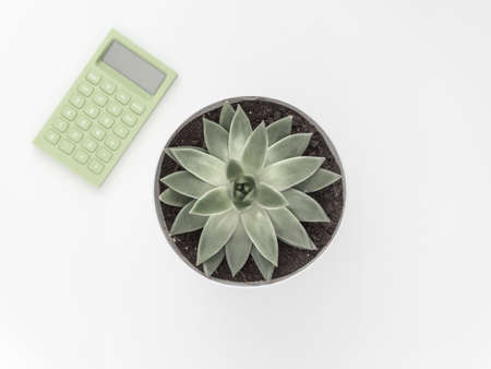 Succulent, calculator on a white background. Flat lay, top view minimalistic natural composition