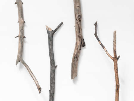 Dry tree branches on a white background. Flat lay, top view minimalistic natural composition Фото со стока - 136726995