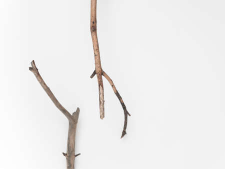 Dry tree branches on a white background. Flat lay, top view minimalistic natural composition Фото со стока - 136727049