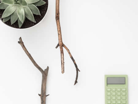 Dry tree branches, succulent, calculator on a white background. Flat lay, top view minimalistic natural composition.