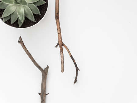 Dry tree branches, succulent, on a white background. Flat lay, top view minimalistic natural composition. Фото со стока