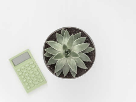 Succulent, calculator on a white background. Flat lay, top view minimalistic natural composition. Фото со стока