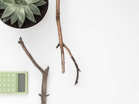 Dry tree branches, succulent, calculator on a white background. Flat lay, top view minimalistic natural composition