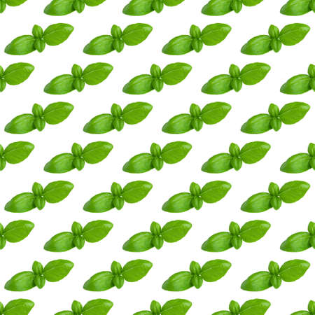 Fresh basil leaves seamless trend pattern isolated on white background