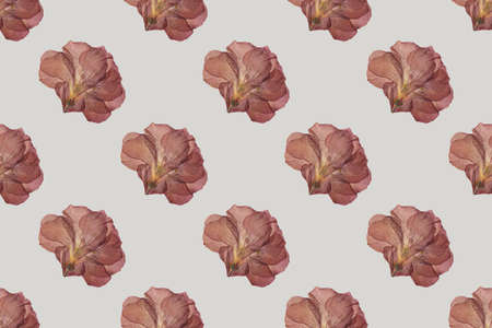 Dry red flower seamless trend pattern isolated on light background. Herbarium. Top view 写真素材