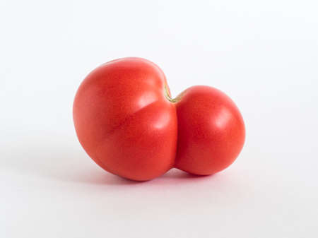 Fresh ugly red farm tomato on white background. Trendy vegetarian vegetables. Healthy food